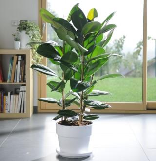 plantas retro las plantas de nuestras madres vuelven a estar de moda madridcode. Black Bedroom Furniture Sets. Home Design Ideas